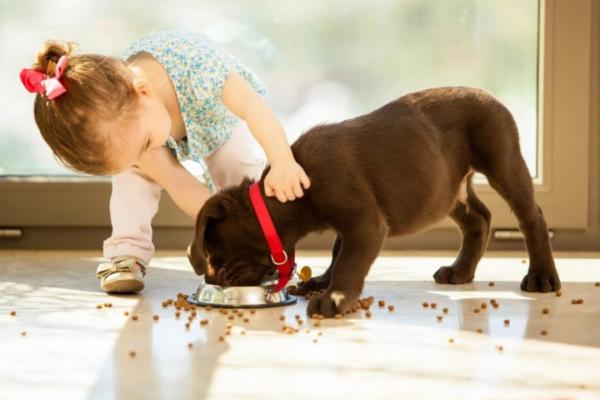 ∪・ェ・∪ Pet Nutrition | 提升狗狗健康?先了解最基本的:怎麼分析每天給予的飲食下手